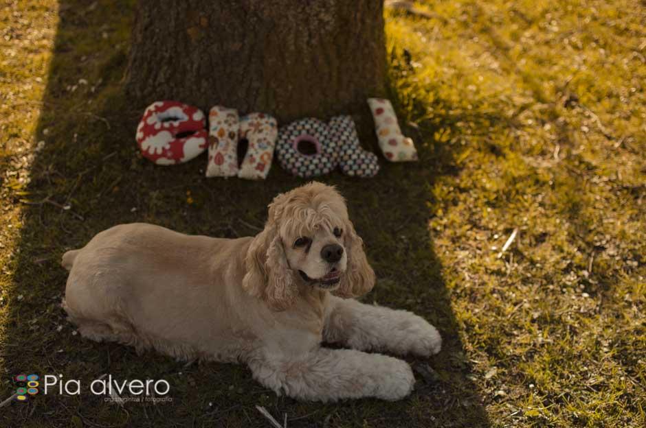 piaalvero fotografía de embarazo Bizkaia y Navarra-4